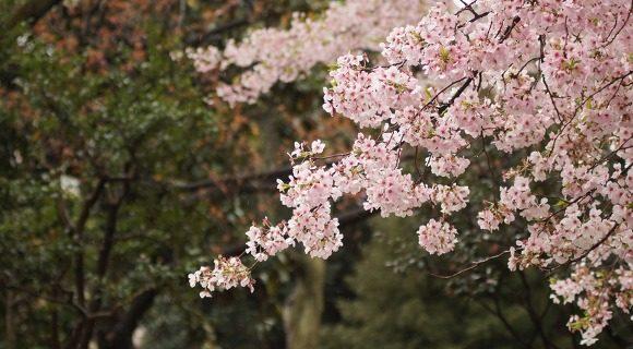 알레르기 비염을 유발하는 꽃가루 종류 & 예방법!