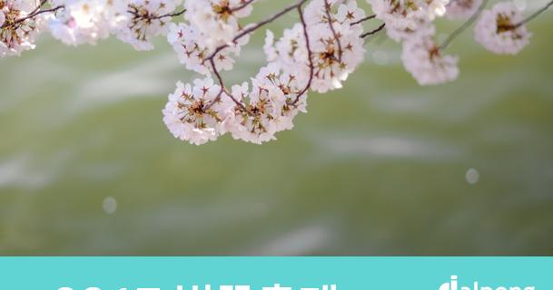 송파구 석촌호수 벚꽃축제 개최! '전국 벚꽃축제 일정'